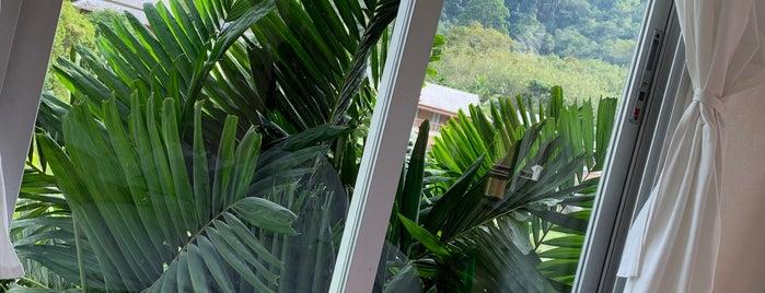 TheLifeCo - Casa Sakoo is one of Phuket.