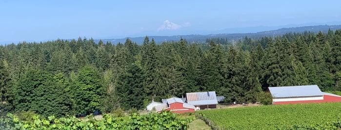 Hawks View Cellars is one of Wine World.
