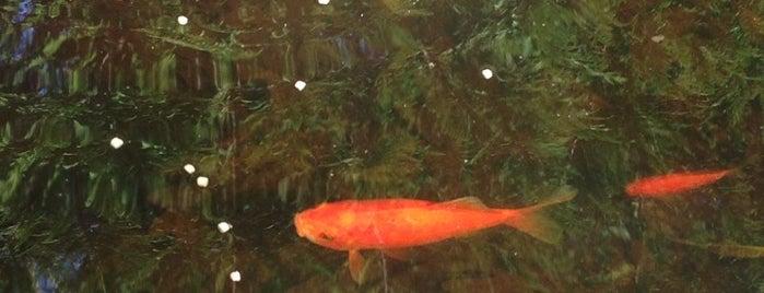 Roberta's Pond of Wonders is one of Tempat yang Disukai Johnny 🚀.