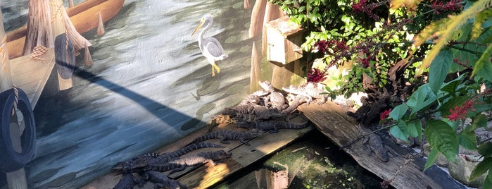 St. Augustine Alligator Farm Zoological Park is one of Florida.