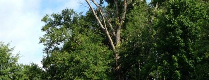 Big Cypress Bayou near Caddo Lake is one of Texas / USA.