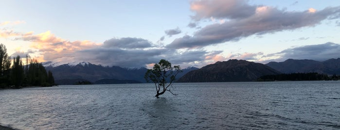 That Wanaka Tree is one of Best of NZ - South Island.