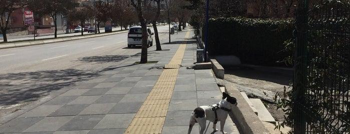 Rajiv Gandi Caddesi is one of Ankara - My Favorites.