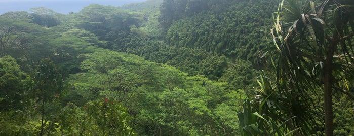 Waikamoi Ridge Trail is one of Lieux qui ont plu à Jingyuan.