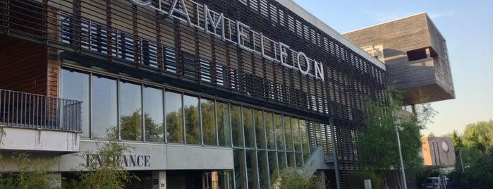 Cameleon is one of Lieux qui ont plu à Kris.