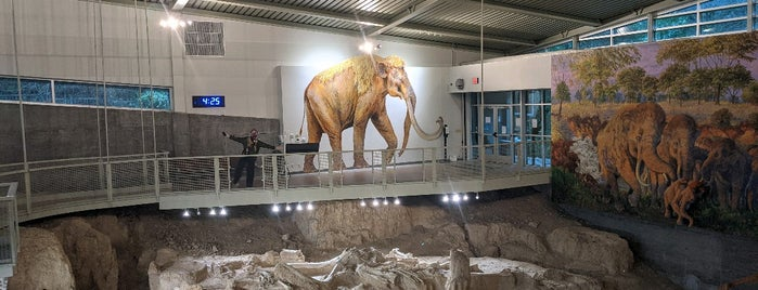 Waco Mammoth National Monument is one of Texas Favorites.