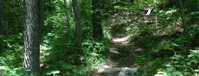 Appalachian Trail To Shuckstruck Tower is one of Deep South Road Trip.