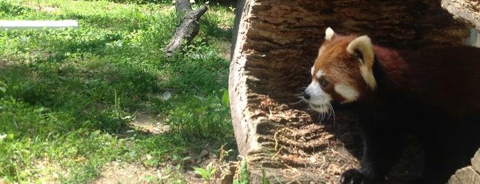 Binghamton Zoo at Ross Park is one of Jen 님이 좋아한 장소.