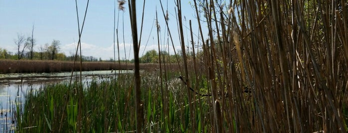 Mentor Marsh State Nature Preserve is one of Colleenさんのお気に入りスポット.