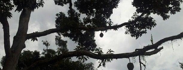 Fruitteto Durian Orchard, Raub is one of Neu Tea's Bentong & Raub Trip.