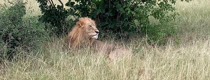 Chobe National Park is one of CBS Sunday Morning 5.