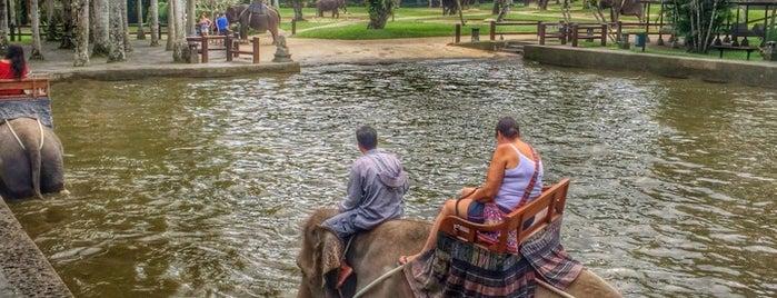 Elephant Safari Park is one of Orte, die reem gefallen.