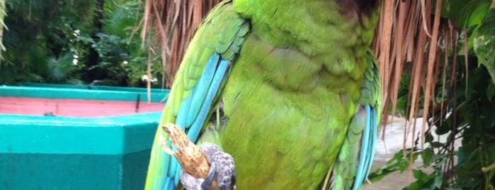 Crococun Zoo is one of Канкун что посмотреть?.