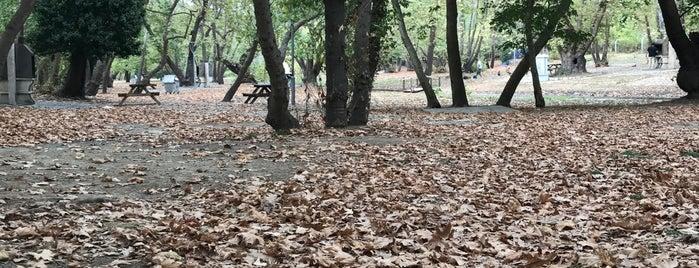 Yana Piknik Alanı is one of Orte, die Cengiz gefallen.