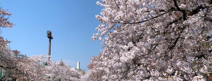 立川公園 is one of サイクリング大好き♥.