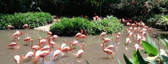 Jurong Bird Park is one of Lion City.