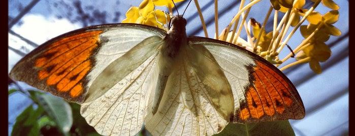 Butterfly Park (Taman Rama-Rama) is one of Kuala Lumpur.