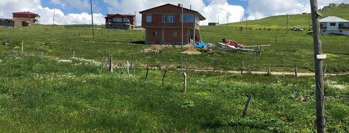 Çakıroğlu Yaylası is one of Mountain Resorts In Black Sea Region.