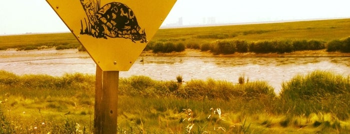 Edwin Forsythe National Wildlife Refuge is one of 82 Best Birdwatching Spots in the US.