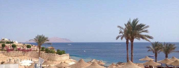 Beach at Hilton Sharks Bay Resort is one of Andriy : понравившиеся места.