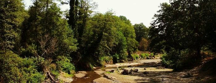 İğneada Longoz Ormanları Milli Parkı is one of Aylin'in Beğendiği Mekanlar.