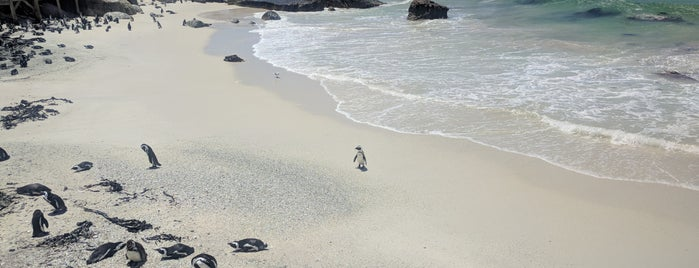 Boulders Beach Penguin Colony is one of Cape Town List.