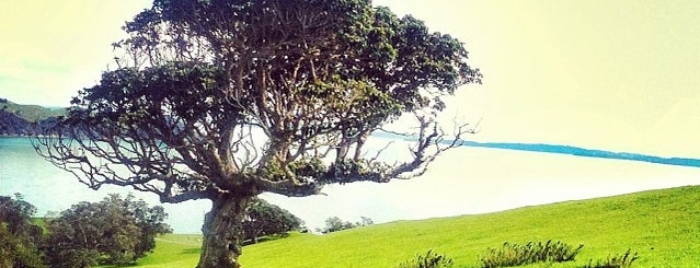Duder Regional Park is one of New Zealand 🌳.