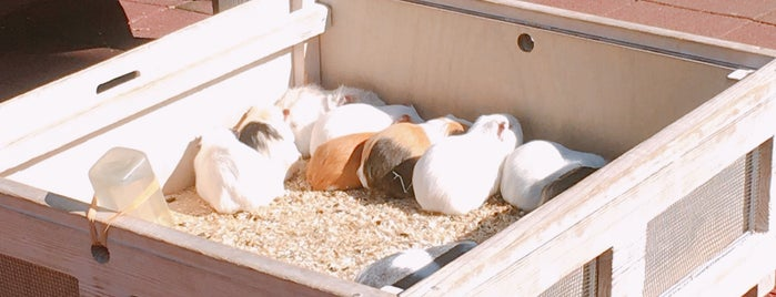 Guinea Pig Petting Zoo is one of Masahiro 님이 좋아한 장소.