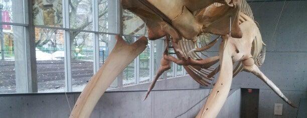 Beaty Biodiversity Museum is one of Vancouver.