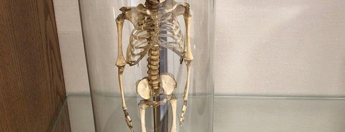 Warren Anatomical Museum is one of Orte, die Dana gefallen.