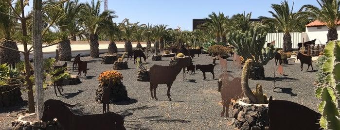 Centro de Arte Canario is one of Tempat yang Disukai Sindicalsitas de Canarias SSCC.