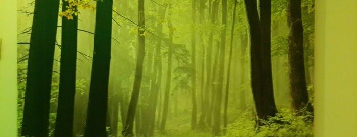 yeşil yaşam güzellik merkezi is one of Yunus : понравившиеся места.