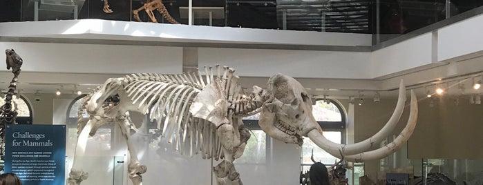 Age Of Mammals is one of Lugares que quero conhecer.