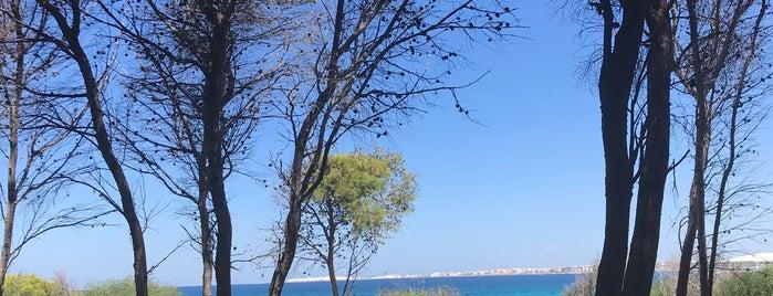 G • beach is one of Puglia.