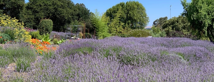 Lavenderbee Farm is one of Favorites in Sonoma County.