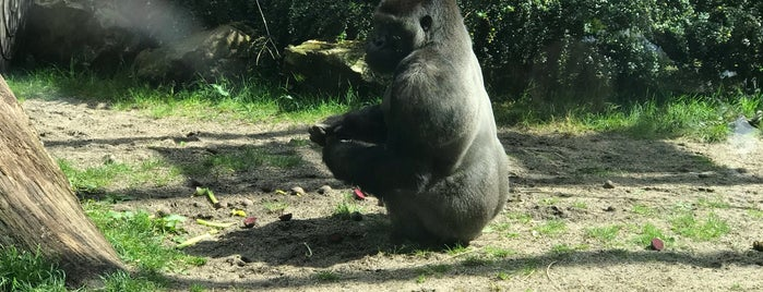 Gorilla Adventure is one of Orte, die Kevin gefallen.