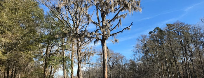 Lumber River State Park is one of North Carolina.