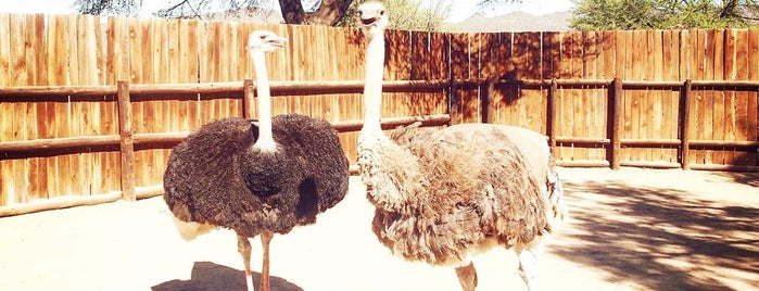 Cango Ostrich Farm is one of The Garden Route.