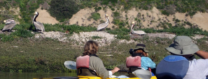 Southwind Kayak Center Rental Base is one of SoCal Activities.