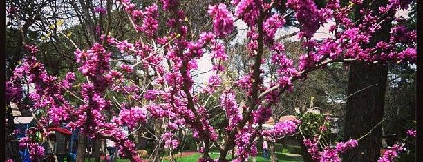 Veysi Paşa Korusu is one of Park bahce ve korular.