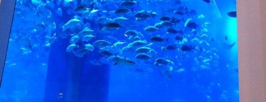 Dubai Aquarium is one of Dubai #4sqCities.