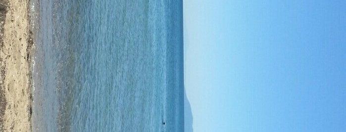 Onur Beach&Cafe is one of Plaj 2.