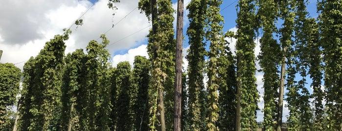 Brasserie d'Erquelinnes - Brootcoorens is one of Beer / Belgian Breweries (2/2).