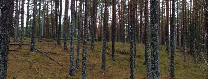 "ГПК Заказник ""Гряда Вярямянселькя"" | Värämänselkä is one of สถานที่ที่บันทึกไว้ของ Galina."