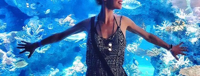S.E.A. Aquarium is one of Tempat yang Disukai Hanna.