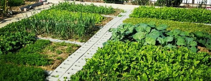 Atakent 3.Etap Meyve ve Hobi Bahçesi is one of Numan'ın Beğendiği Mekanlar.