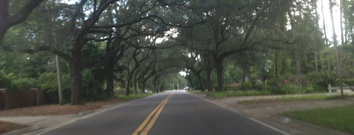 12th Ave Tree Tunnel is one of Great Outdoors - Top Picks.