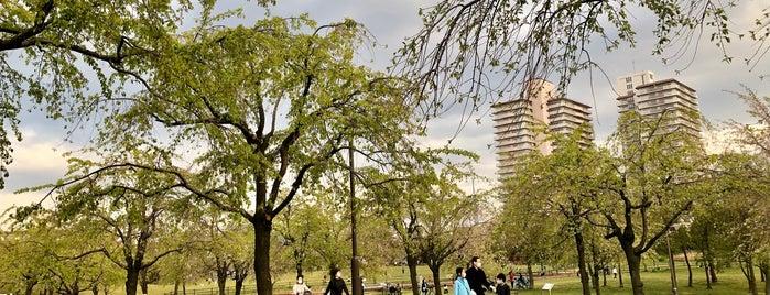 尾久の原公園 is one of Masahiroさんのお気に入りスポット.