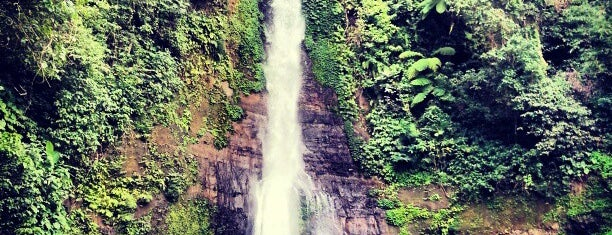Gitgit Waterfall is one of Bali life.