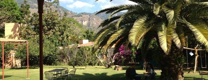 La Sombra Del Sabino is one of Tepoztlán.